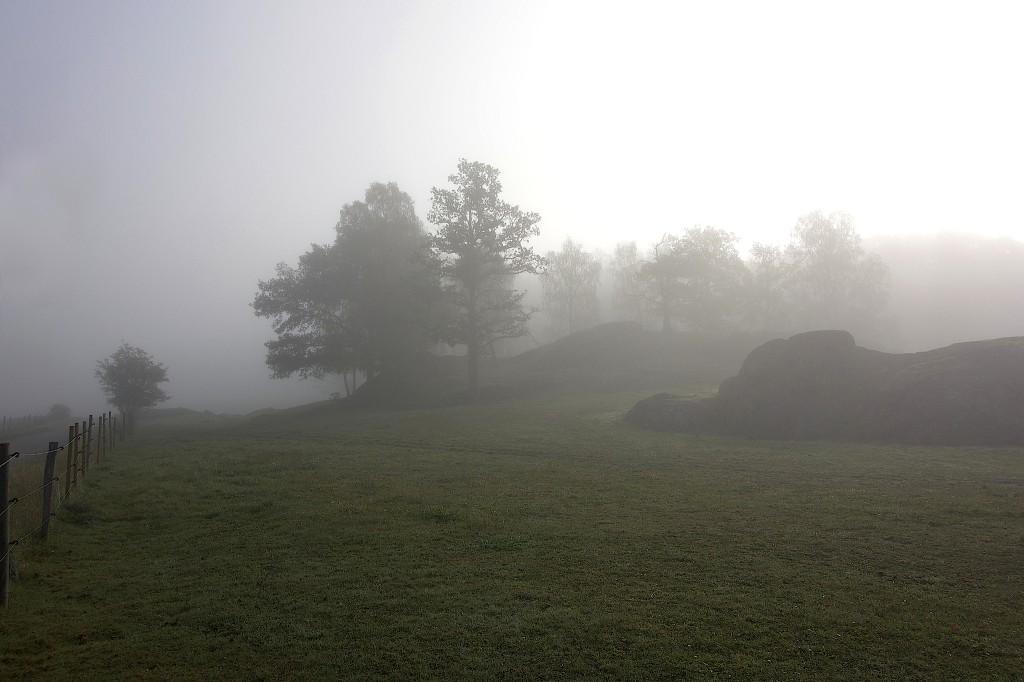 Diminsvepta hästhagar i tidigt morgonljus