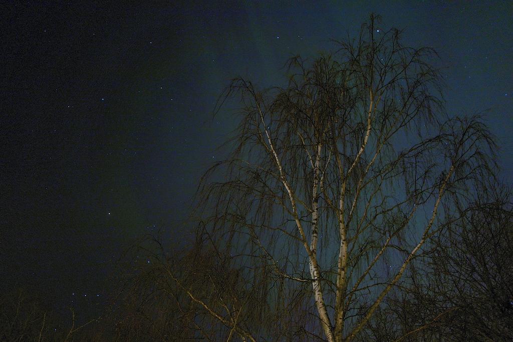 Norrsken, stjärnor och en björk.