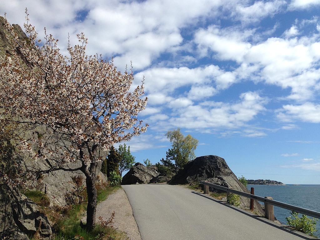 Strandvägen med berg och blommande körsbärsträd på vänster sida och  Östersjön till höger.