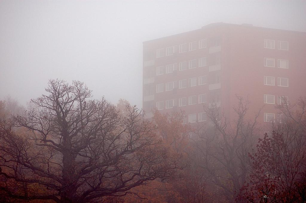 Ek & höghus i dimma
