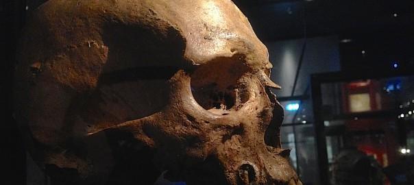 Dödskalle på Historiska museet i Stockholm