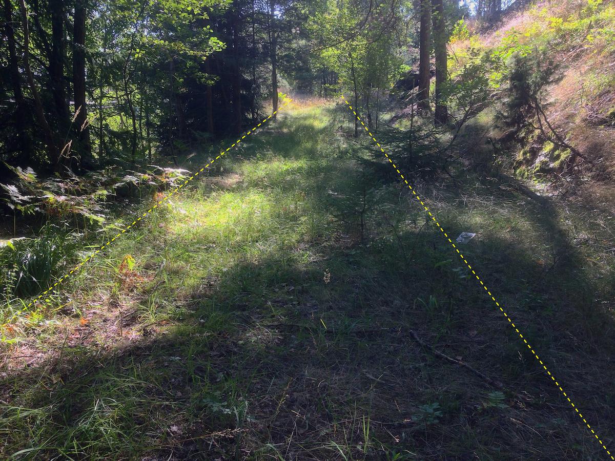Gräsbevuxen gammal väg mitt i skogen, flankerad av träd.